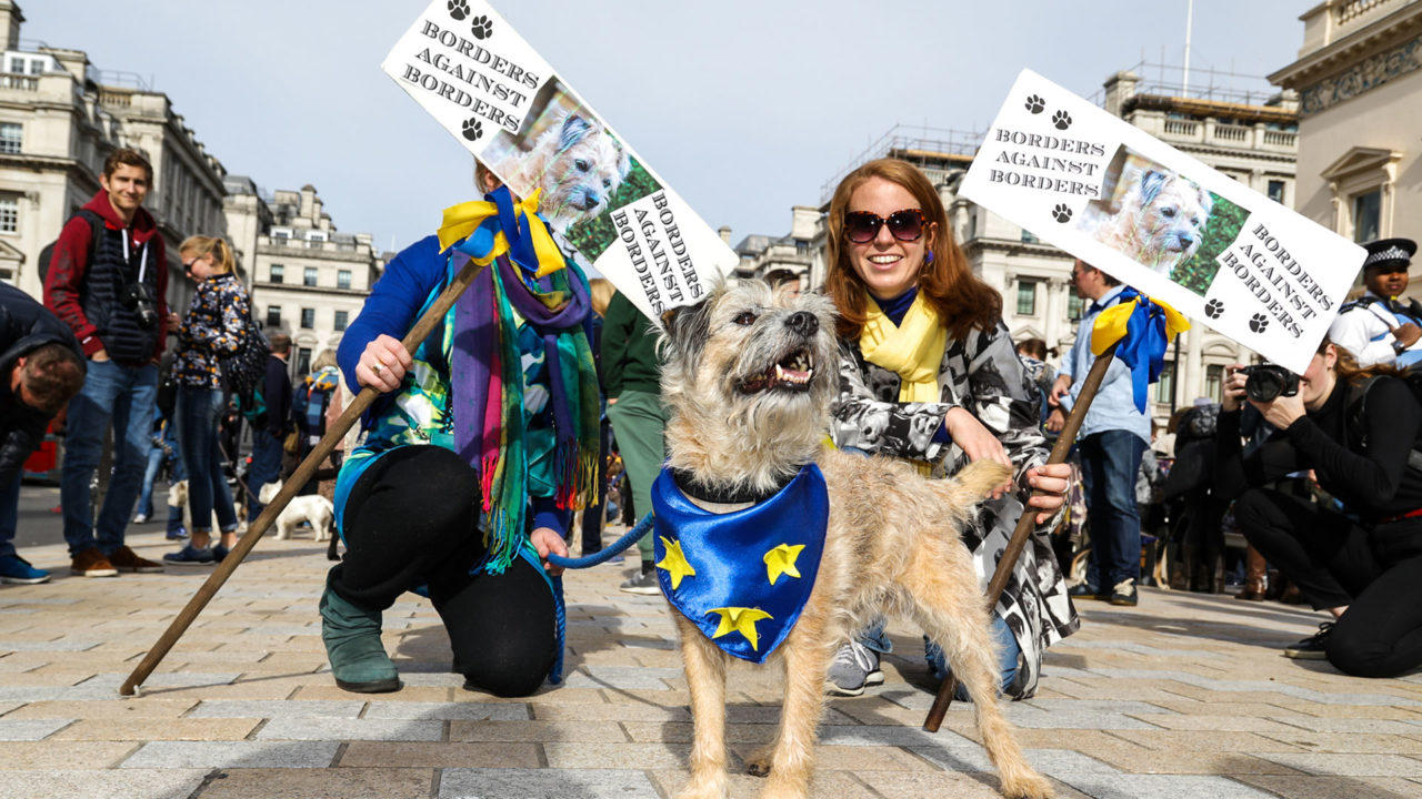 http://quitteoudouble.eu/wp-content/uploads/2018/11/Wooferendum_photographer_PHIL_WATSON-4-1-1280x720.jpg